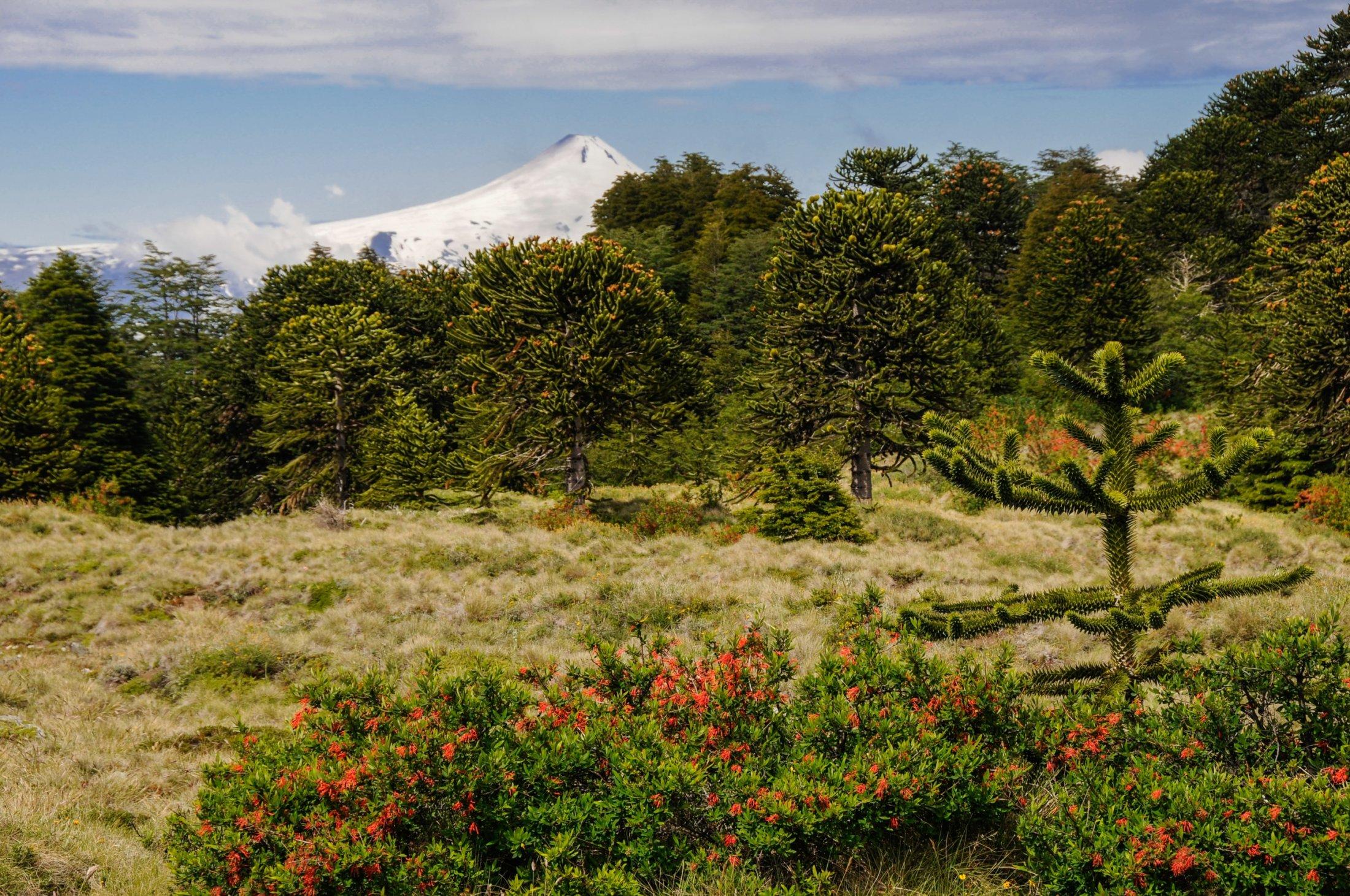 Vulkanblick im P.N. Huerquehue