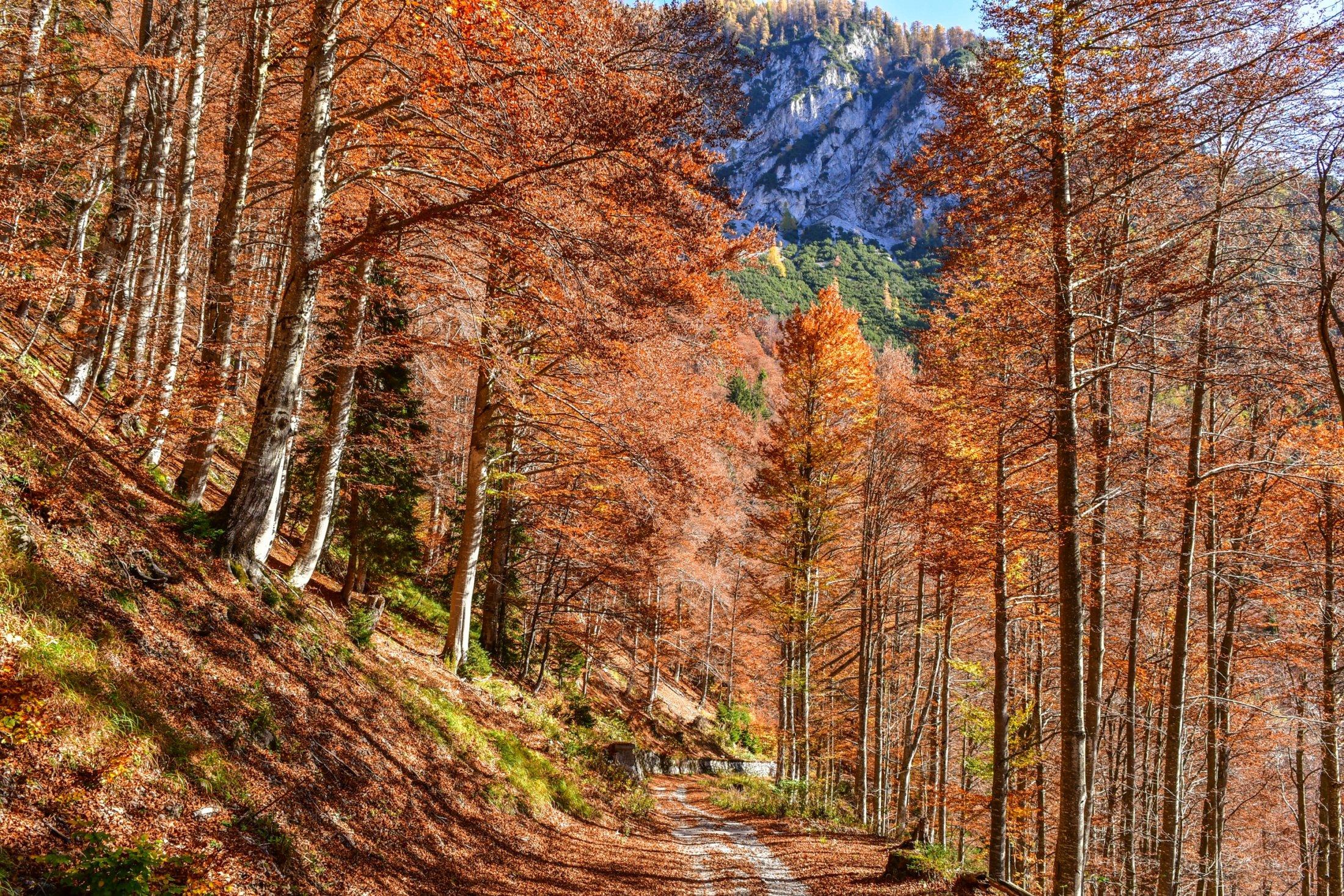 Abfahrt ins Val Saisera durch Buchenwald