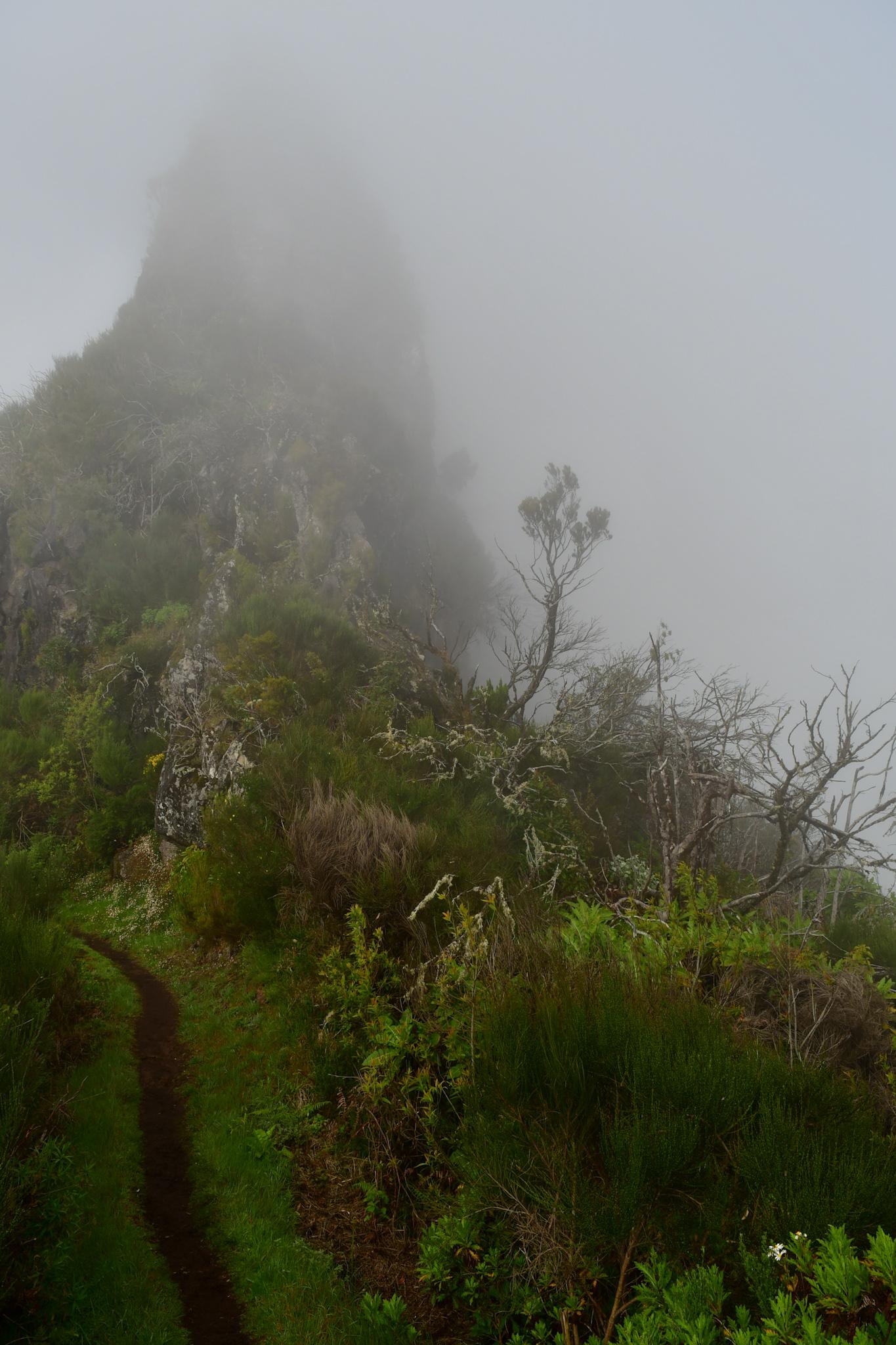 Madeira 20190421 101052