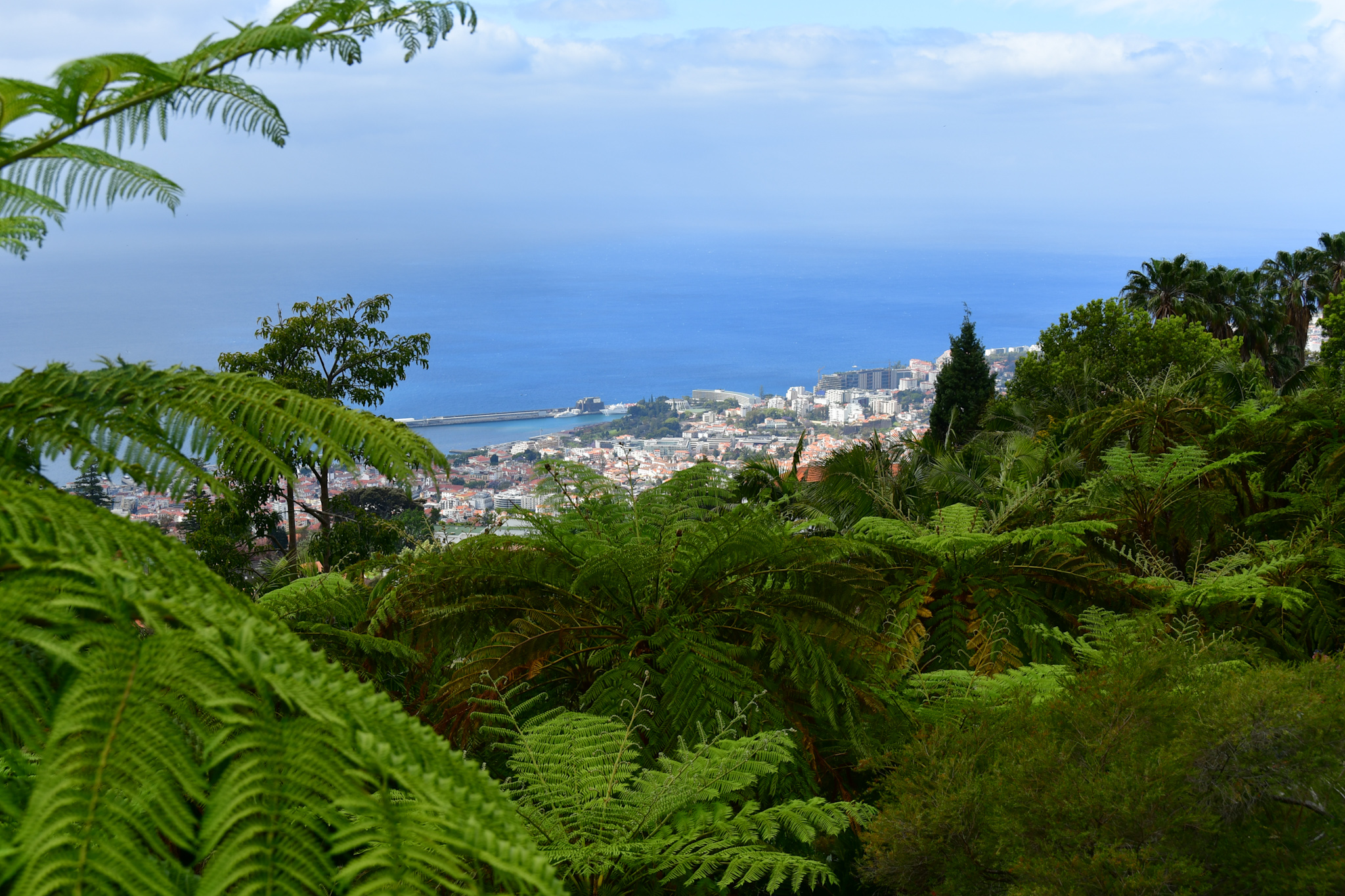 Madeira 20190426 112534