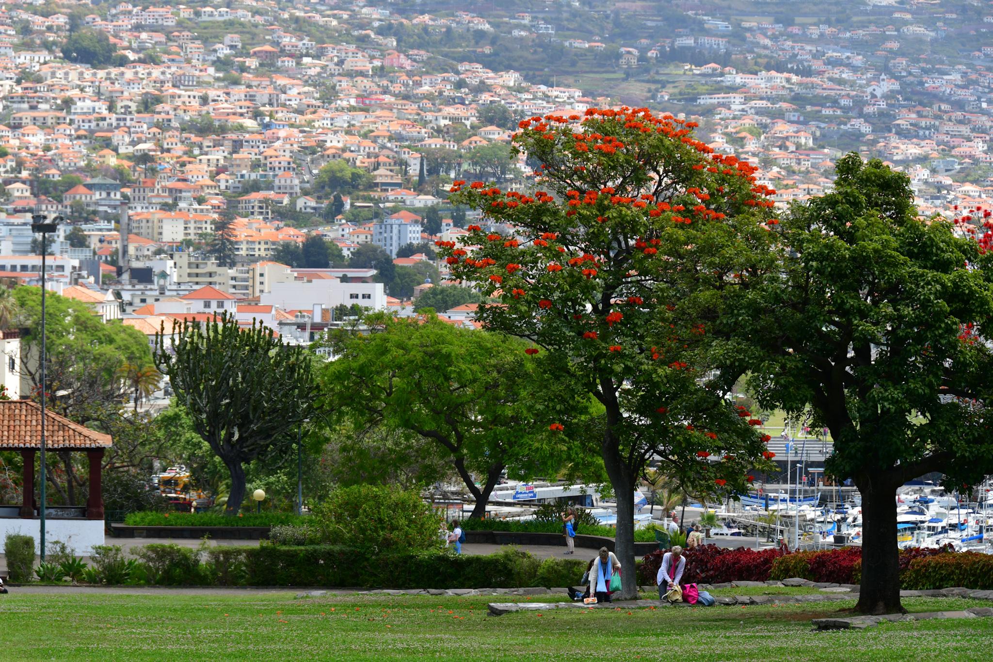 Madeira 20190426 133756