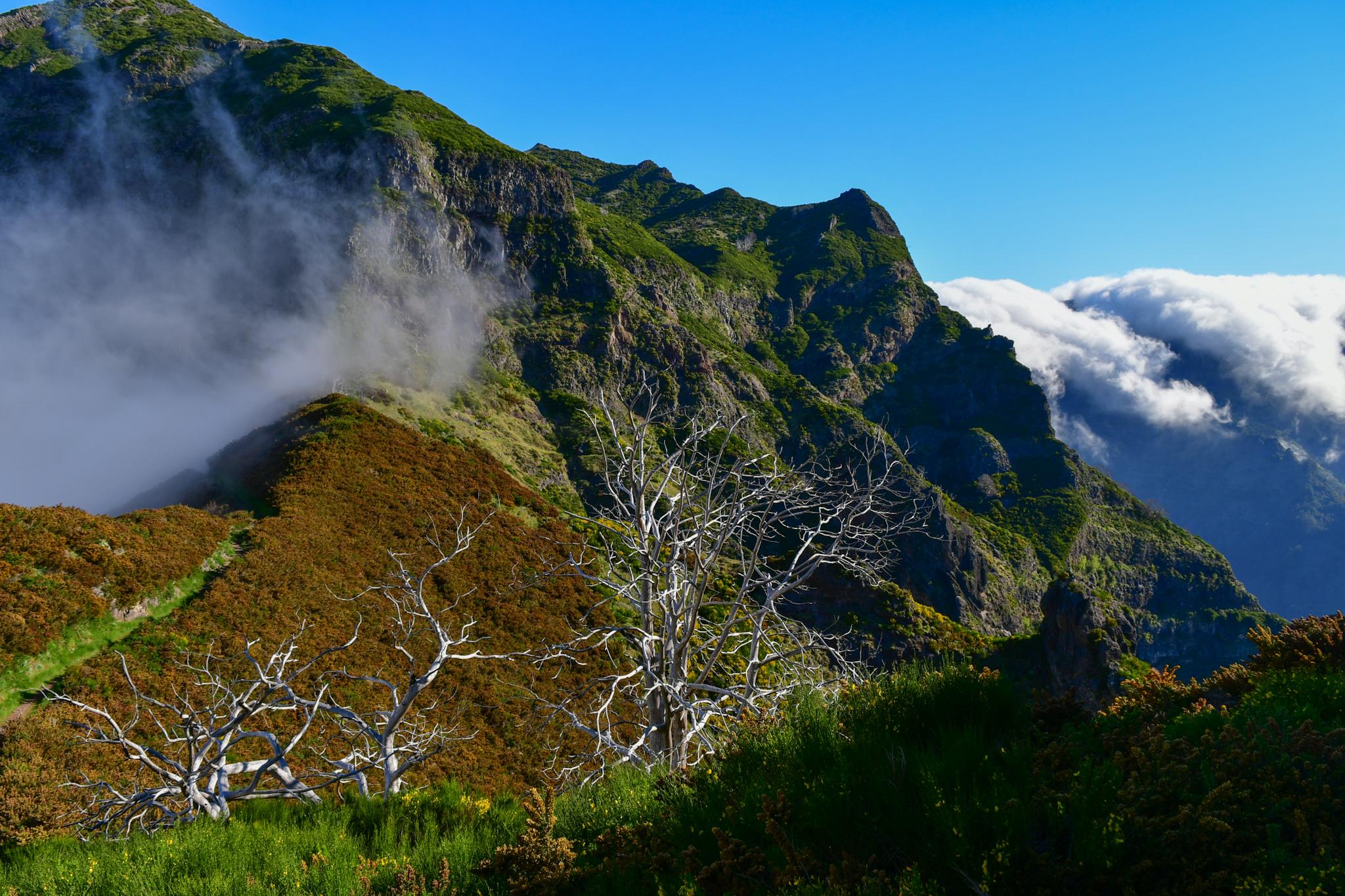 Madeira 20190501 091810
