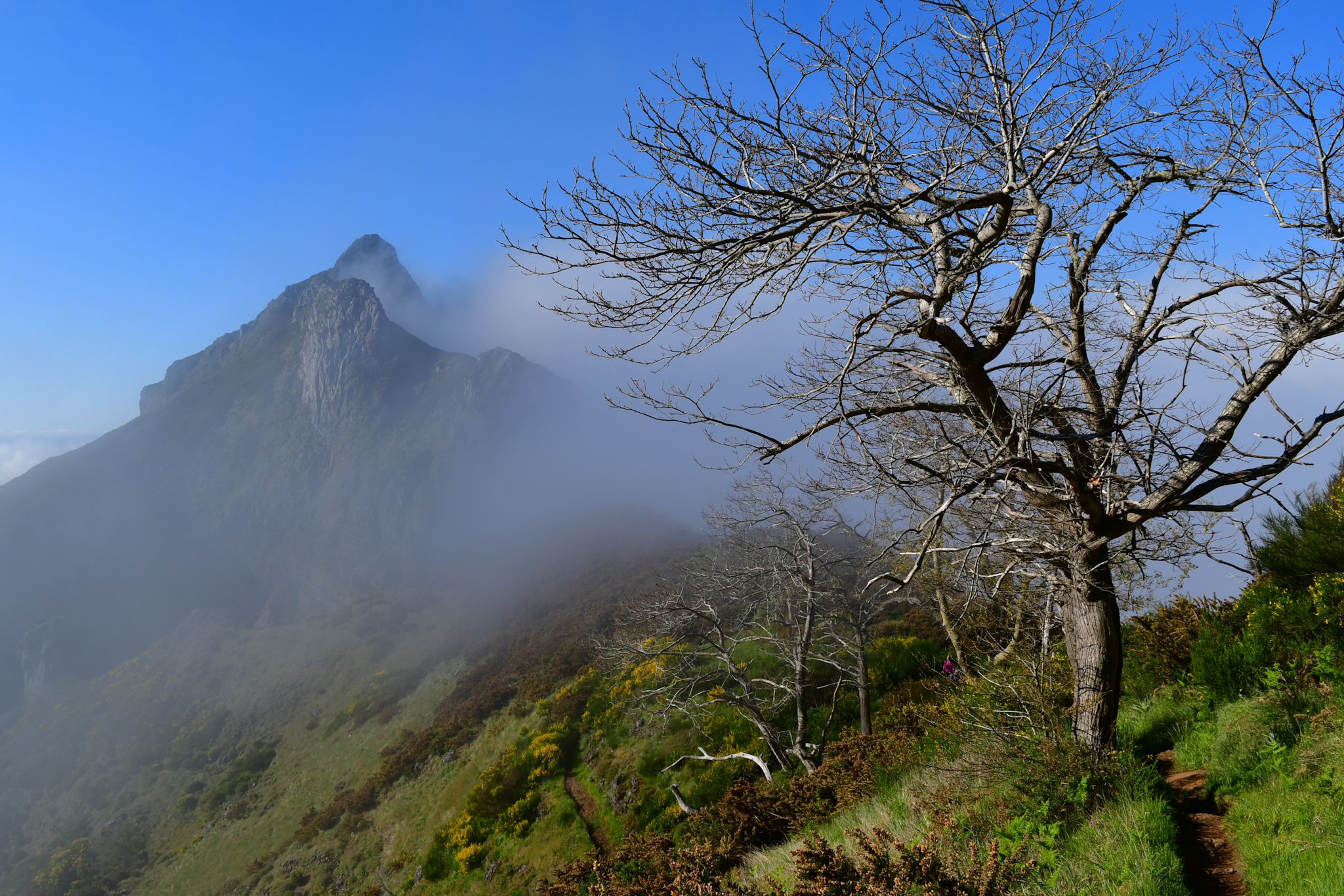 Madeira 20190501 092753