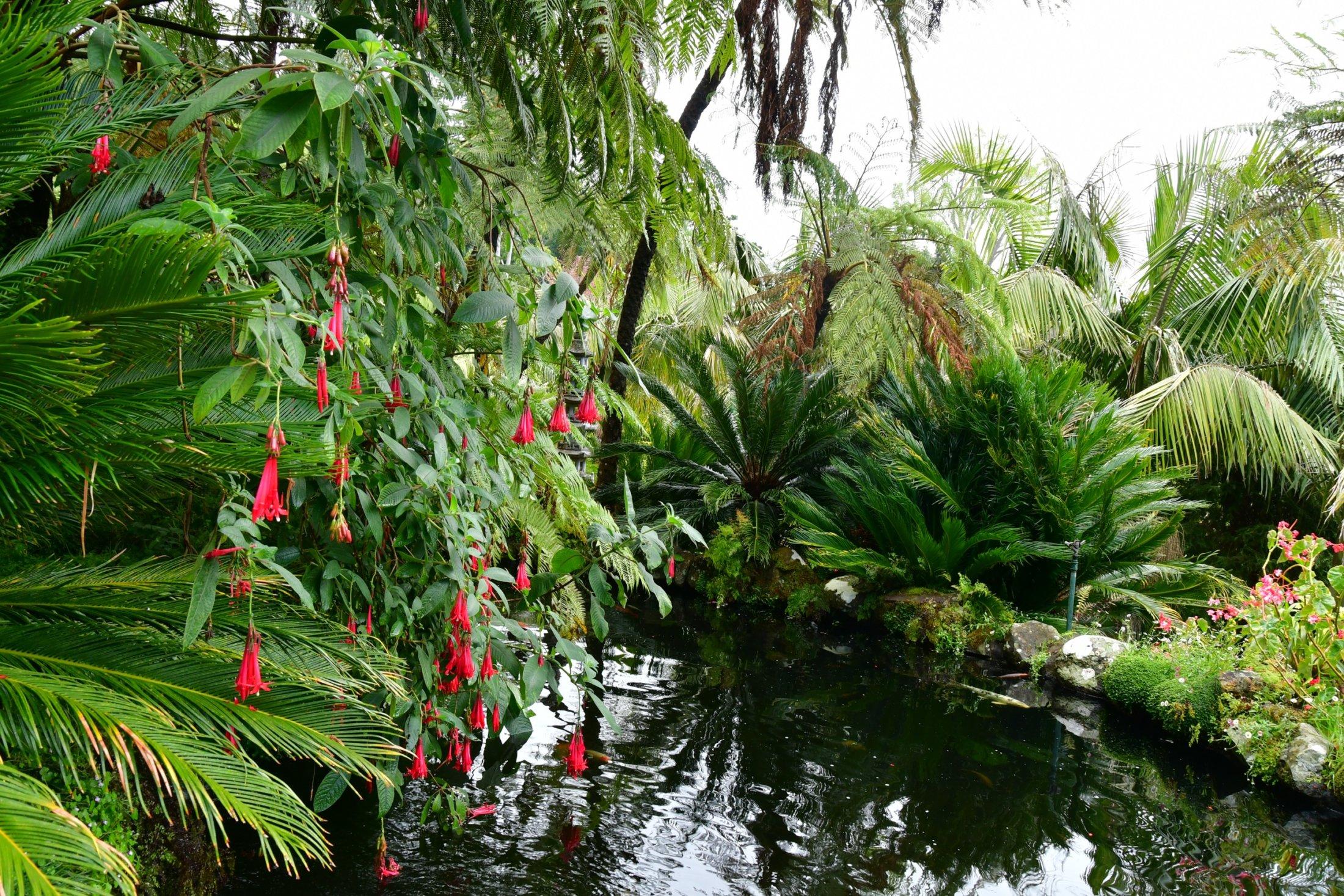 Blandy's Garden bei Funchal