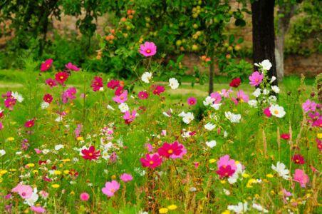 Garten der Bretagne