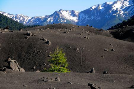 Vulkanasche im Lago Conguillo Nationalpark