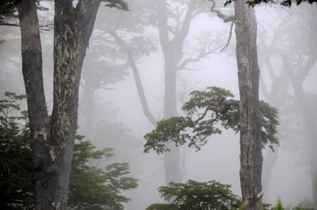 Rain Forest in P.N. Huerquehue
