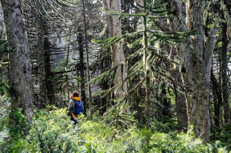 Wegsuche im Regenwald