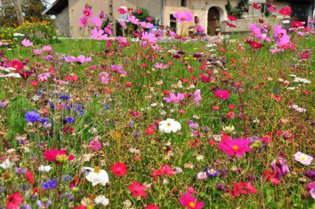 Blumenwiese im französichen Jura