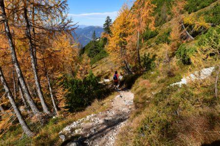 Wunderbarer Lärchenwald am Weg