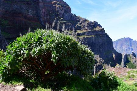 Madeira 20190422 121710