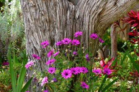 Madeiras Blumen