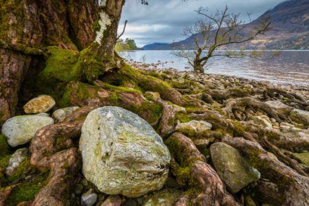 Wurzeln am Loch Maree