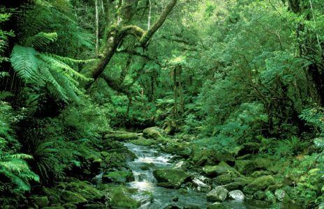 Grüne Hölle im Regenwald in Neuseeland