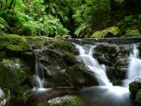 Wanderung Levada do Rei, Santana und Rosengarten (Tag 9)