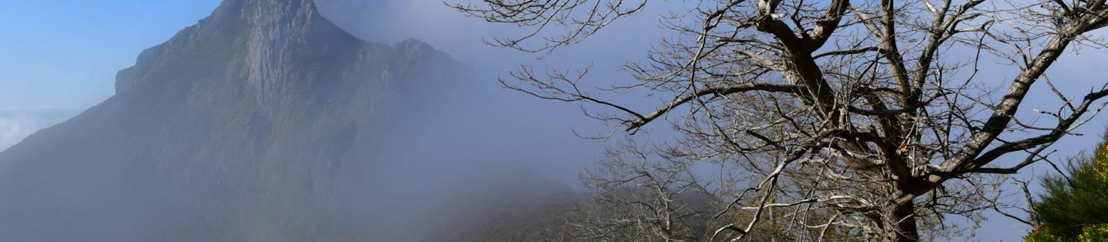 Besteigung Pico Grande im zentralen Bergland (Tag 11)