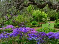 Wandern bei Ribero Frio und Blandy's Garden (Tag 12)