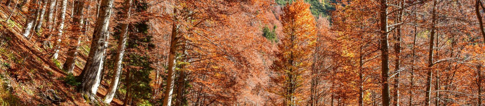Bike&Hike-Tour zur Cima del Cacciatore in den Julischen Alpen, 2071m