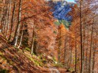 Tourenbericht - Bike-Hike Bike&Hike-Tour zur Cima del Cacciatore in den Julischen Alpen, 2071m
