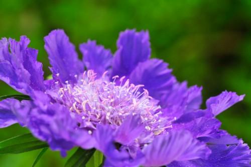 Fotoalbum Pflanzen und Blüten