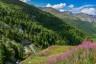 Aosta, Aostatal, Berge, Bike, Italien, Sommer, Strasse, Wald, Wiese, clouds, forest, italy, lärche, meadow, mountains, street, summer, wolken