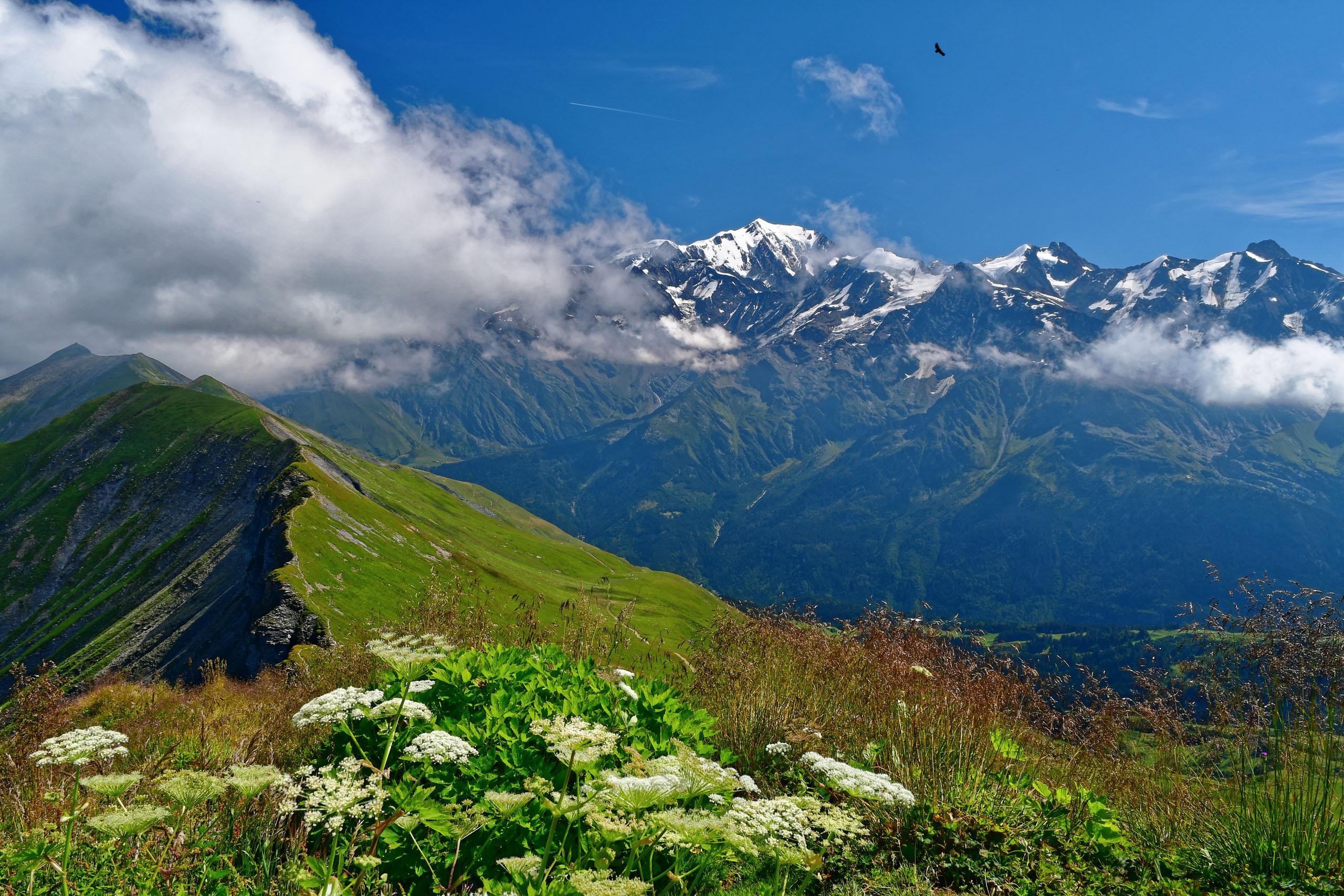 Mont Blanc von der Aiguille Croche mit Geier
