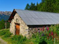 Bauernhaus mit Lupinen