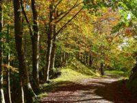Fahrt durch Edelkastanienwälder