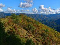 Herbstliche Wälder