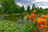 Froschsee im Schlosspark Dennenlohe
