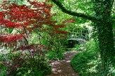 Feuerahorn im Schlosspark Dennenlohe