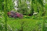 Sumpfgebiet im Schlosspark Dennenlohe