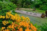 Rhododendron im Schlosspark Dennenlohe