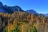 Wunderbarer Lärchenwald am Aufstiegsweg