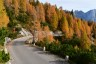 Berge, Herbst, Mauer, Strasse, Wald, abfahrt, autumn, forest, lärche, mensch, mountainbike, mountains, street, wall