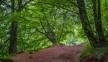 Wald oberhalb Espinama