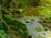 Fluss nahe Ruderi dell'Eremo