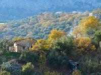 Winterlicher Wald bei Civita